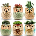jomass-owl-pots-2-5-inch-flowing-glaze-succulent-pots-owl-planter-mini-ceramic-pots-small-flower-plant-cactus-bonsai-container-with-hole-6pack reviews